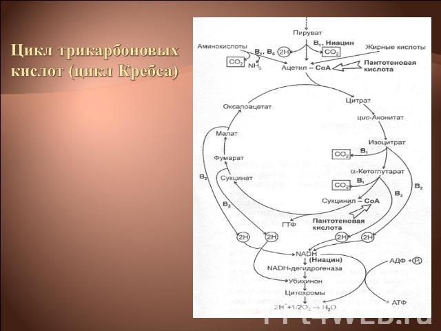 Физиология Микроорганизмов Книгу