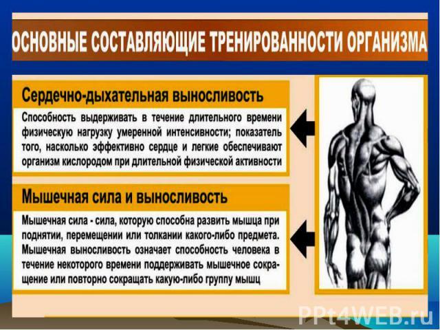 значение физической культуры в здоровом образе жизни