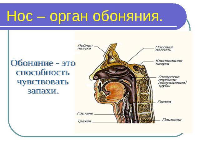 Доклады и презентации про окружающий мир 1234 класс