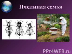 На тему одомашненные насекомые