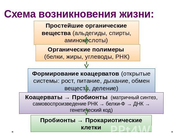 Схема возникновения жизни:
