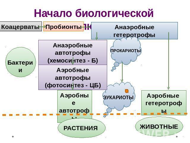 Коацерваты Пробионты