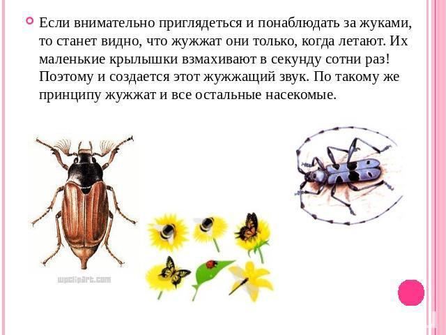 Скачать Презентацию Бабочки 1 Класс