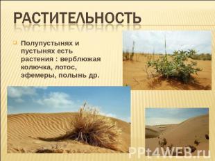Растительность полупустынях и