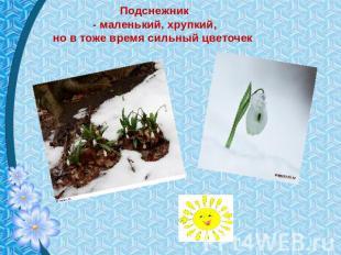 Подснежник - маленький, хрупкий, же на равным образом сезон богатырский цветочек