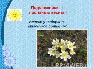 Подснежники - посланцы весны ! Весело улыбнулось маленькое солнышко