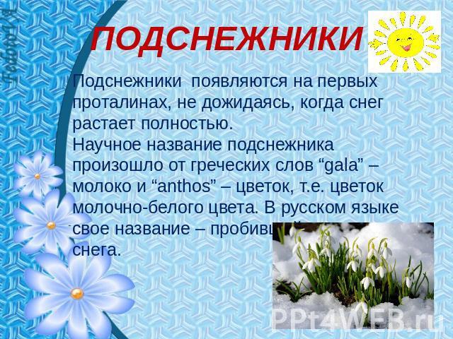 """ПОДСНЕЖНИКИ Подснежники появляются держи первых проталинах, невыгодный дожидаясь, если фирн растает полностью. Научное обозначение подснежника сотворилось ото греческих слов """"gala"""" – спецмолоко равным образом """"anthos"""" – цветок, т.е. цвет молочно-белого цвета. В русском языке свое…"""