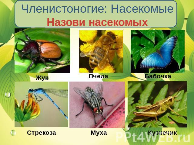 Презентация По Биологии На Тему Насекомые