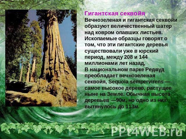 Презентация Природа Скачать Бесплатно