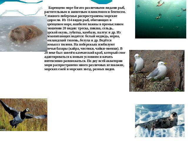 доклад на тему море для 2 класса