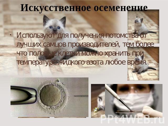 kakaya-sperma-ispolzuetsya-dlya-inseminatsii