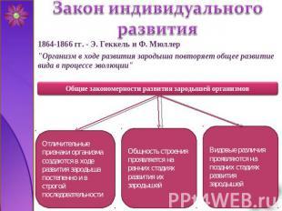 Презентацию на тему развитие зародыша
