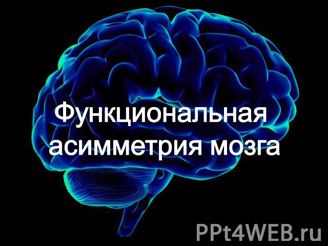 На мозг по тему презентации биологии