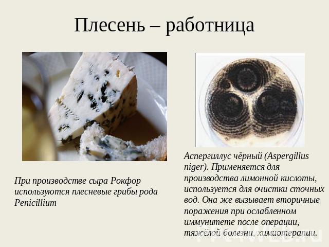 Из чего делают плесень для сыра