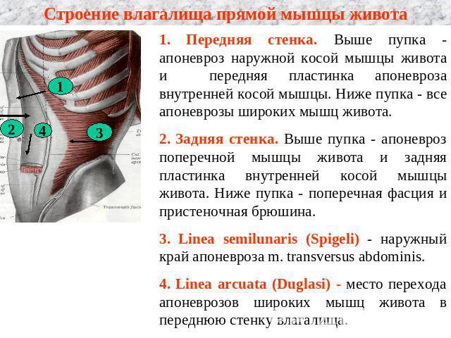 razrez-stenok-vlagalisha