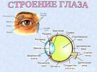 Лекции жданова по восстановлению зрения лекция 4
