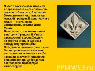 Лилия получила свое термин отдревнекельтского «лили», в чем дело? означает «белизна».