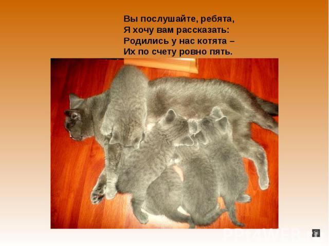 Вы послушайте, ребята,Я хочу вы рассказать:Родились у нас котята – Их объединение счету ровным счетом пять.
