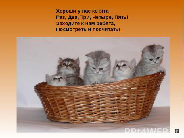 Хороши у нас котята – Раз, Два, Три, Четыре, Пять!Заходите ко нам ребята,Посмотреть да посчитать!