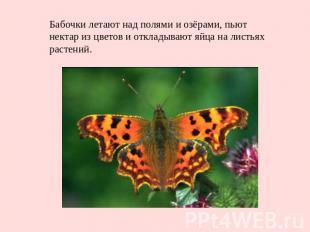 Бабочки летают над полями и озёрами, пьют нектар из цветов и откладывают яйца на