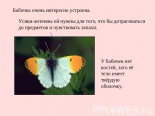 Бабочка очень интересно устроена. Усики-антенны ей нужны для того, что бы дотраг