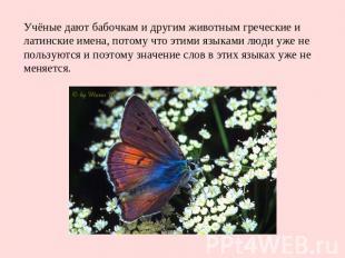 Учёные дают бабочкам и другим животным греческие и латинские имена, потому что э