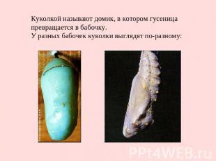 Куколкой называют домик, в котором гусеница превращается в бабочку. У разных баб