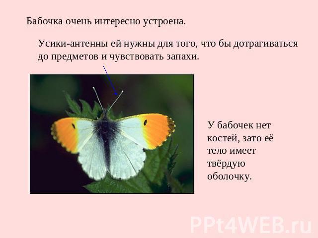 Бабочка очень интересно устроена. Усики-антенны ей нужны для того, что бы дотрагиваться до предметов и чувствовать запахи. У бабочек нет костей, зато её тело имеет твёрдую оболочку.