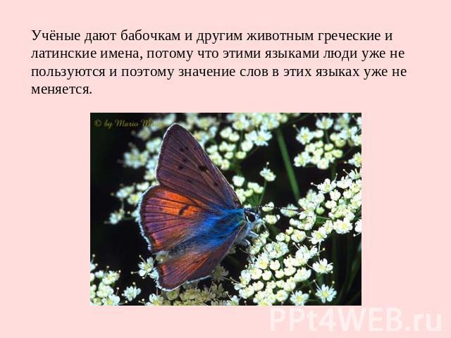 Учёные дают бабочкам и другим животным греческие и латинские имена, потому что этими языками люди уже не пользуются и поэтому значение слов в этих языках уже не меняется.