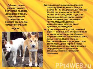 Презентацию на тему домашние животные собаки
