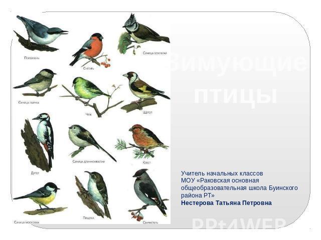 Картинки зимующие птицы смоленщины
