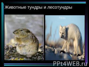 Животные тундры и лесотундры