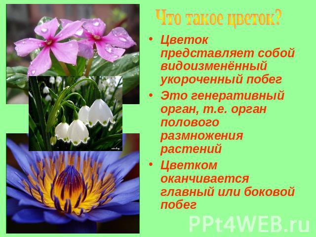 Презентацию на тему цветы маме