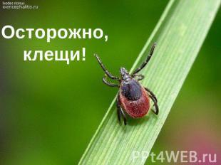 http://ppt4web.ru/images/40/4334/310/img0.jpg