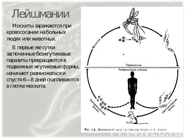 паразиты в глотке человека