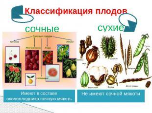 Презентация на тему плоды