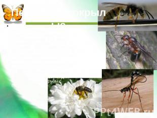 Презентация на тему насекомые