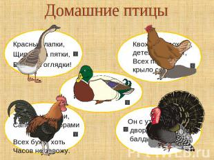 Презентация домашние птицы
