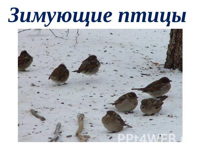 шаблон для презентации зимующие птицы скачать бесплатно