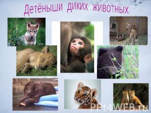 Животные презентацию на тему детям дикие