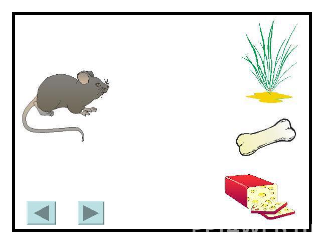 Презентация дикие и домашние животные