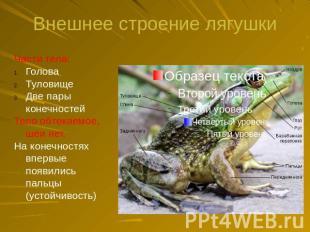 Презентация на тему класс земноводные или амфибии