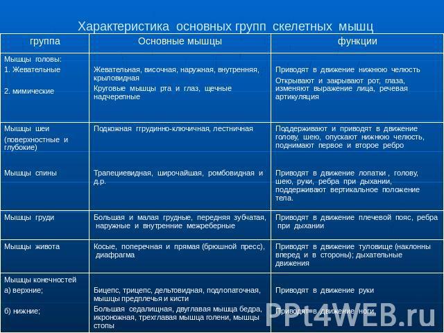 таблицы по биологии по мышцам