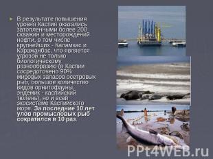 В результате повышения уровня Каспия оказались затопленными более 200 скважин и