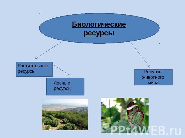 877 как используются водные ресурсы русской равнины?