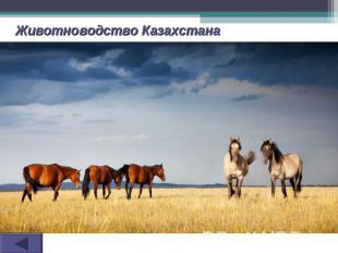 Животноводство Казахстана