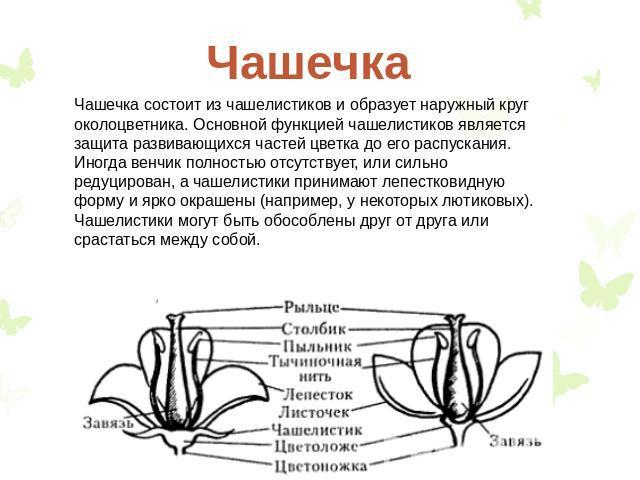 Что такое цветок в биологии