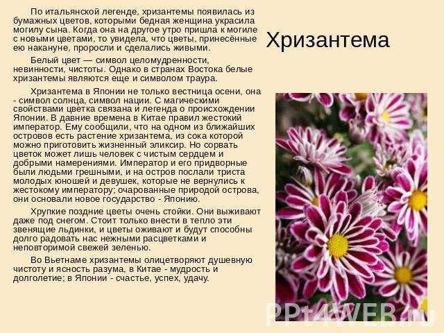 Легенды или поверья связанные с осенних цветы