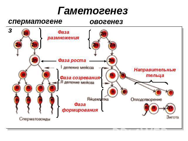 samaya-pri-samaya-krasivaya-golaya-devushka