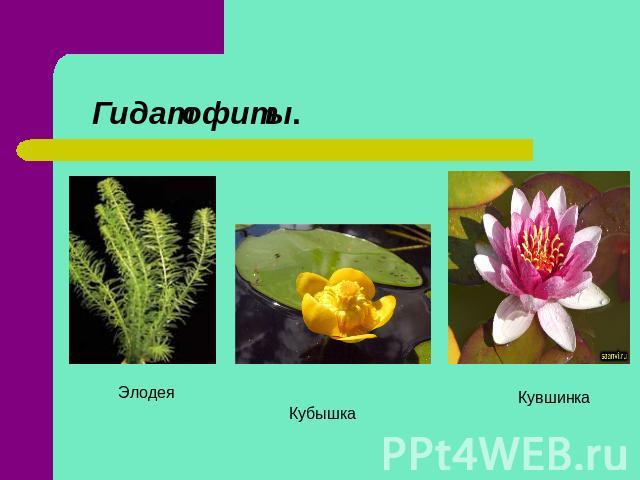 урок биологии знакомство с растениями